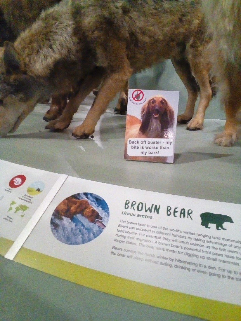 "The bottom half of a display of a brown bear, with its usual label, and an extra label in a plastic stand that reads ""Back off Buster! My bite is worse than my bark."""