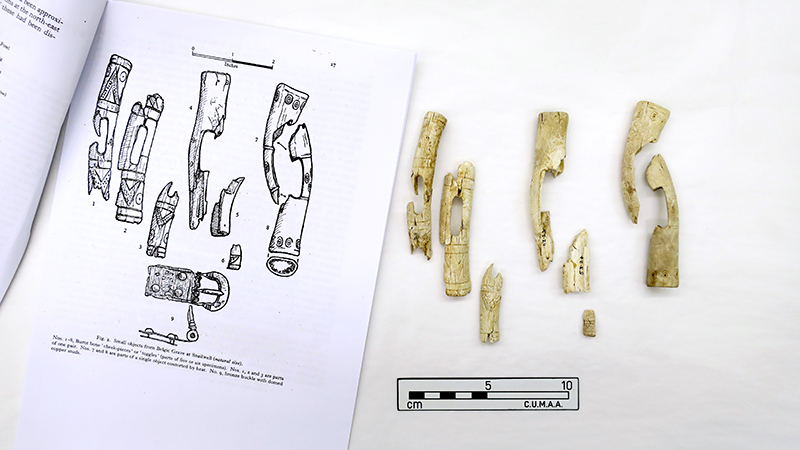 Toggles alongside an archaeology drawing of them