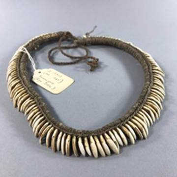 A necklace made from tree kangaroo teeth, late 19th century