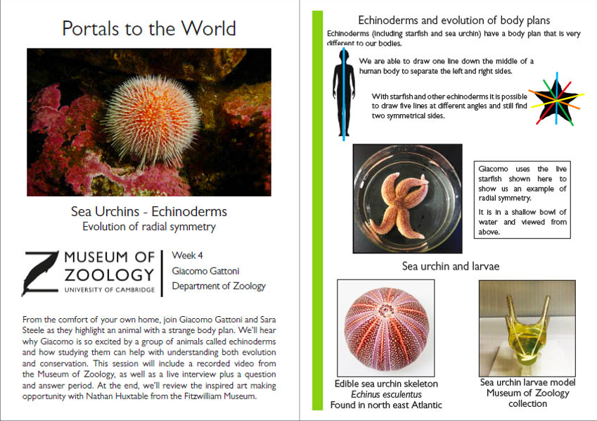 Image of handout: An example spread from the handout for our Echinoderms session