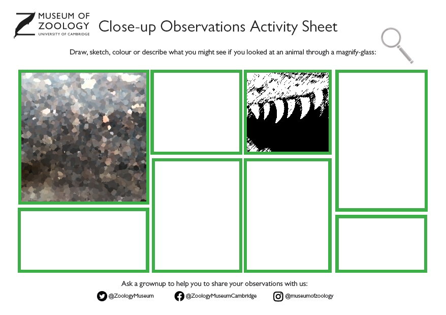 Close-up observations activity sheet