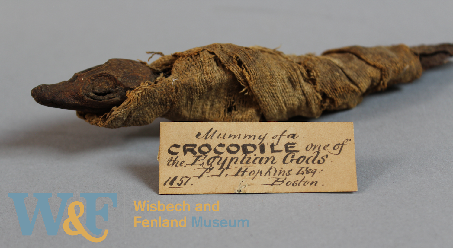 Mummified juvenile crocodile