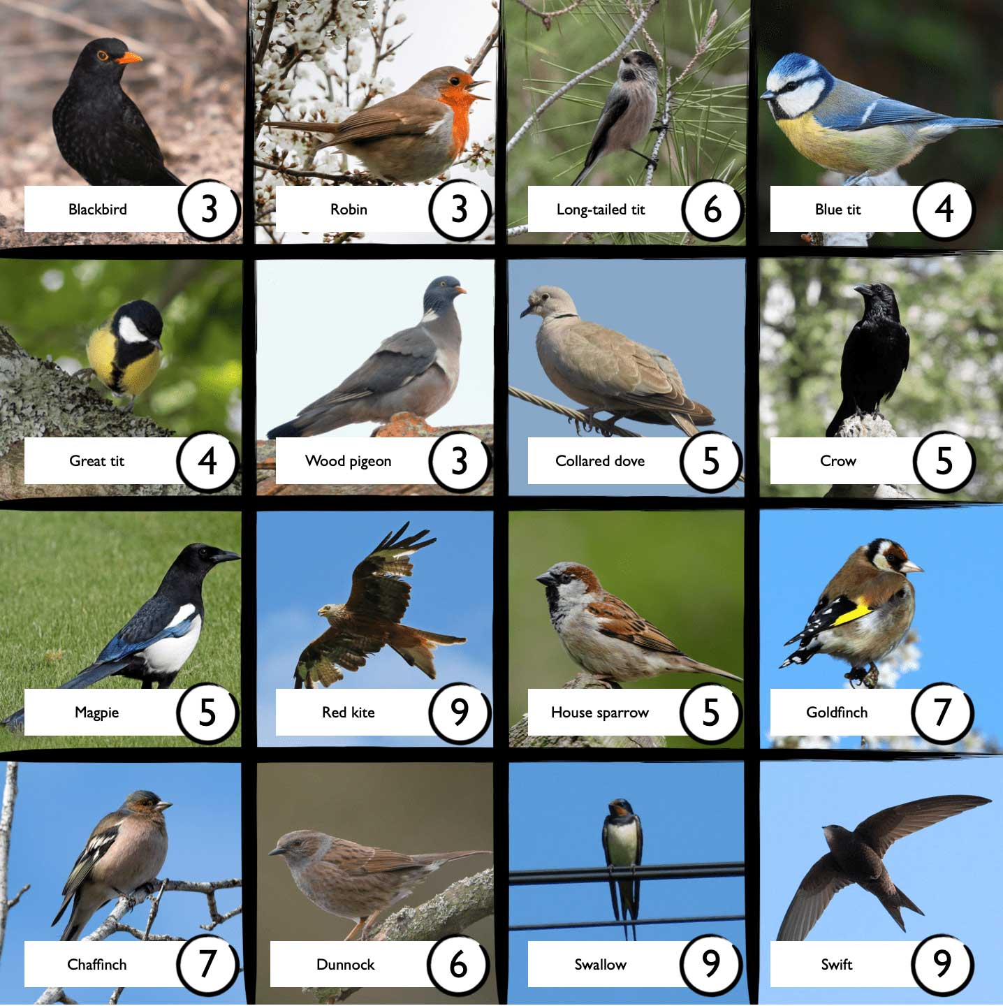 Birds on a bingo sheet