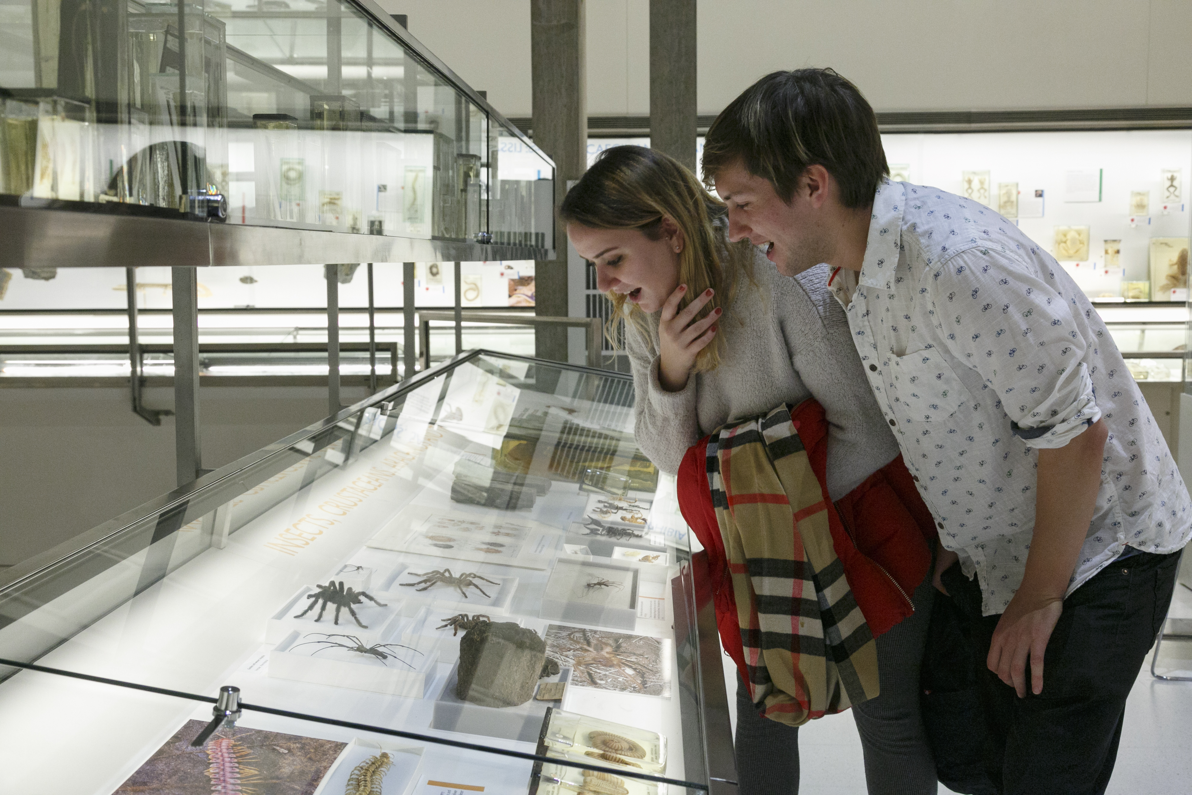 Visitors looking at spider specimen in Museum of Zoology
