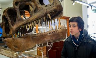 A young man looking at a dinosaur skull