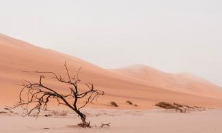 A bare tree in the desert by Ryan Cheng from Unsplashed