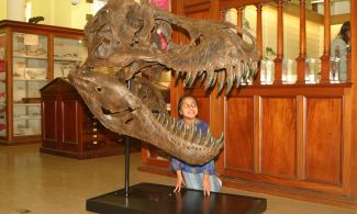 A small child looking into a dinosaur skull