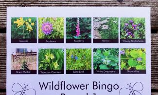 Image of a bingo board showing 10 images of UK wildflowers